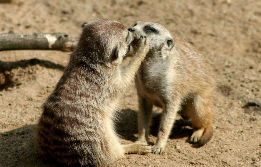 10-crazy-facts-about-kissing-that-will-make-you-go-wow13