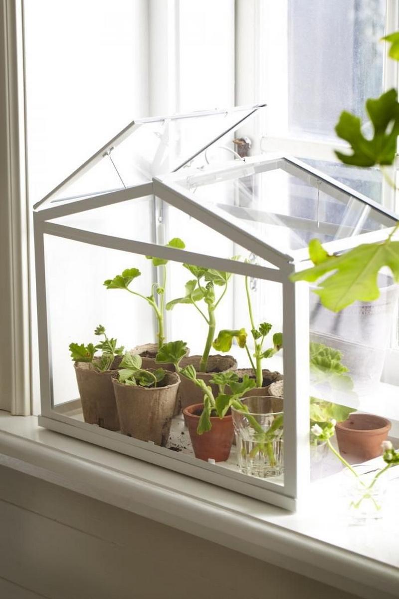 Парники для комнатных растений своими руками.
