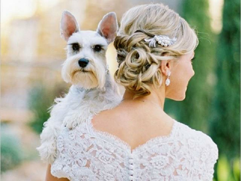 Wedding with pets - Summer Wedding Ideas