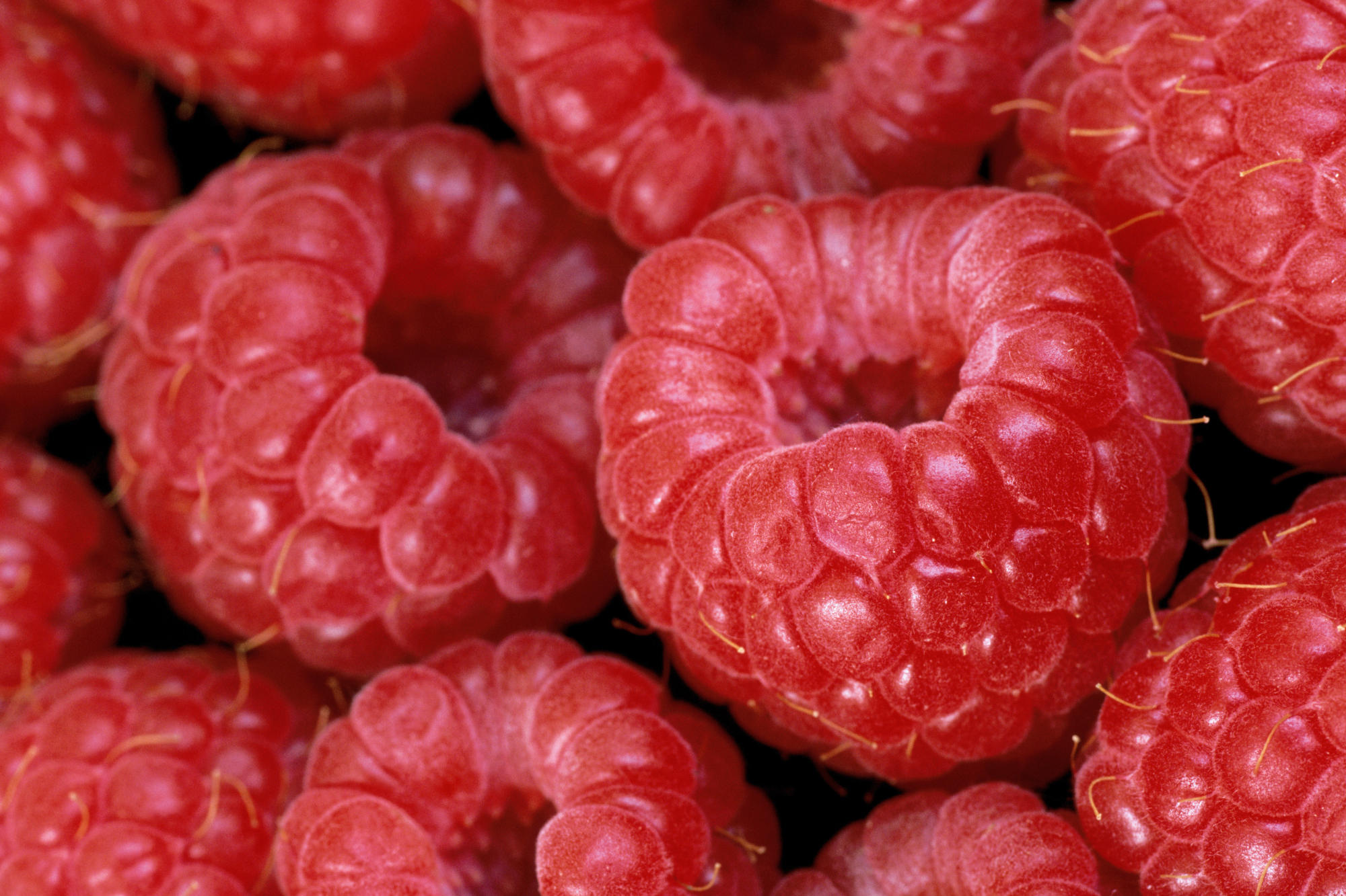 Raspberry - Top 10 Fat-Burning Foods