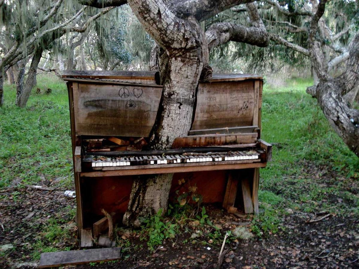 13. Old Piano Tree [California]