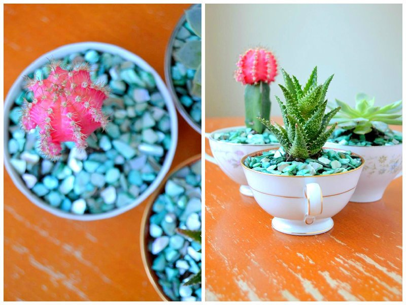 3. Amazing succulents and cacti