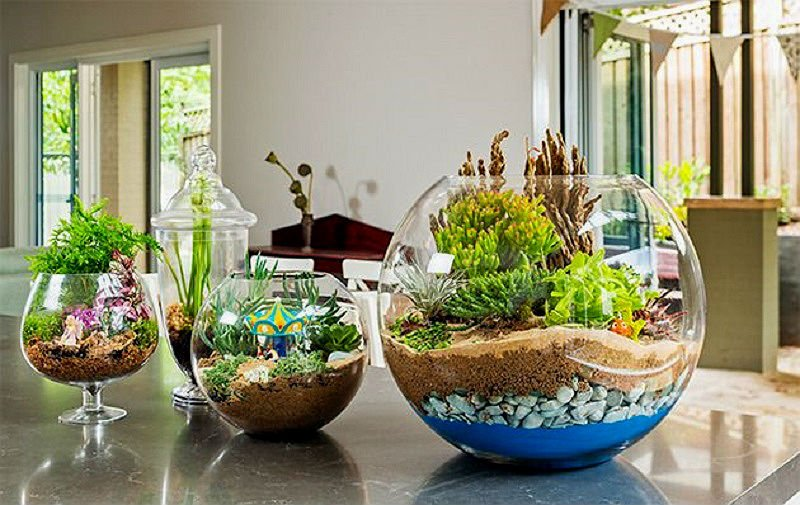 7. Create diy terrarium
