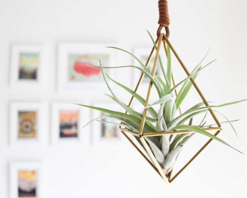 8. Add some zest with air plants