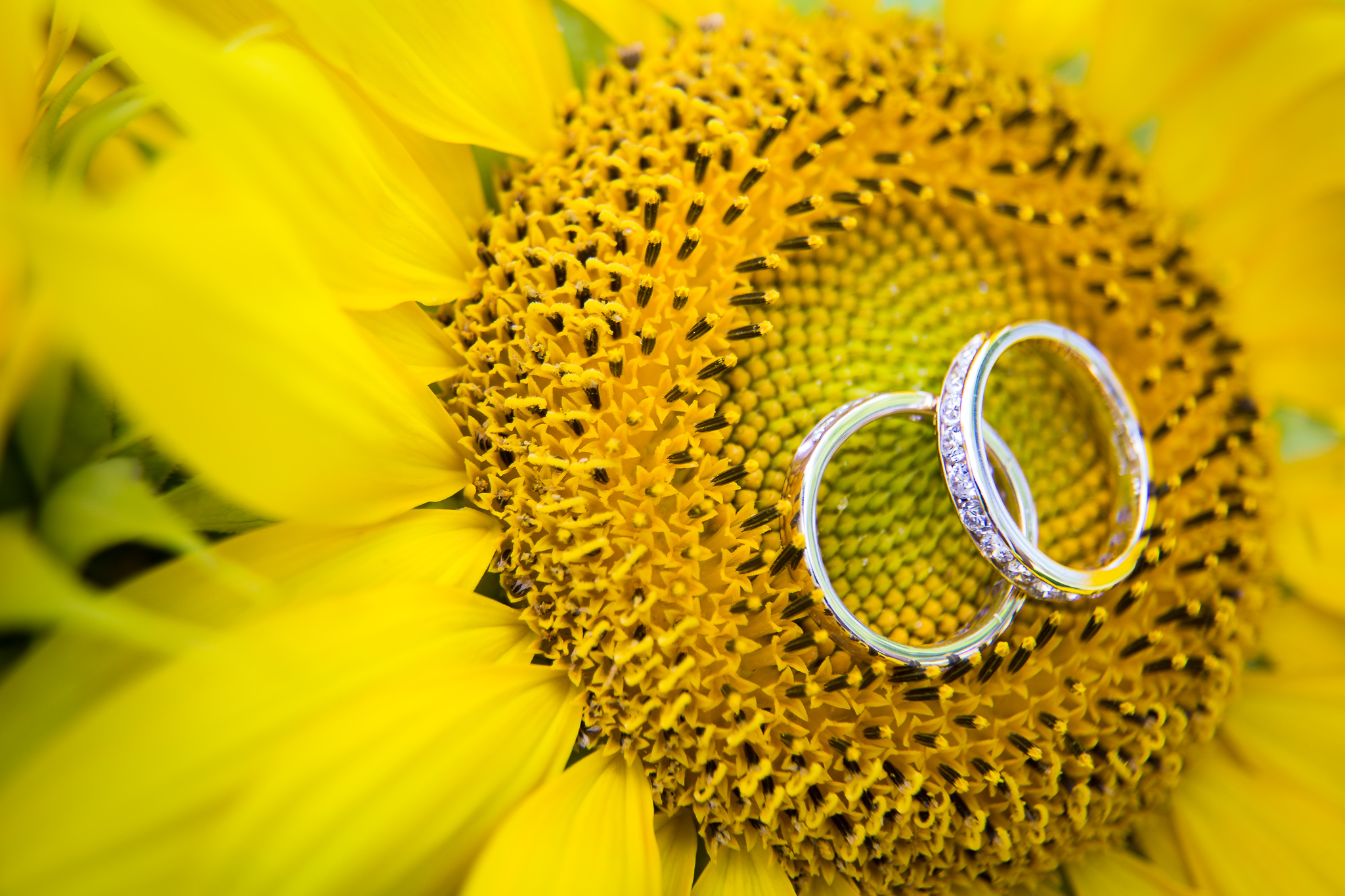 Sunflower Wedding- 10 Awesome Tips