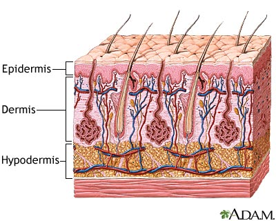 5. Know your skin layers