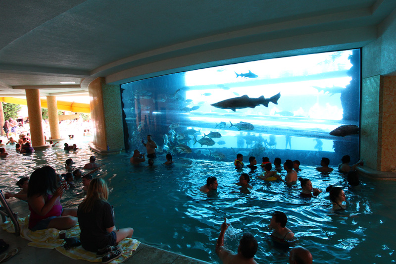 8. Golden Nugget Aquarium Pool, Las Vegas 1