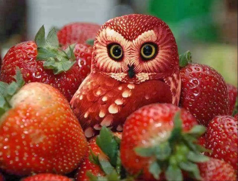 creative_fruit_carvings-08