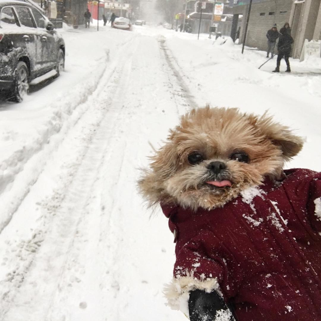 how_were_celebs_surviving_during_snowstorm_jonas_blizzard2016_18