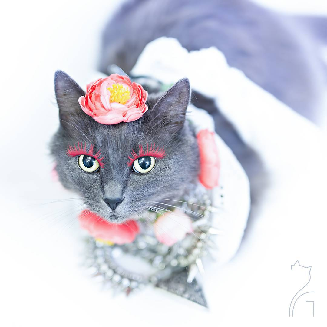 the_most_fashionable_cat_pitzush_puss_in_glam_01