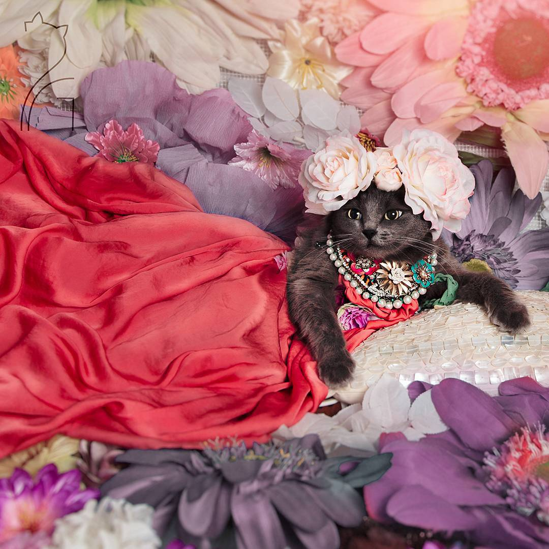 the_most_fashionable_cat_pitzush_puss_in_glam_02