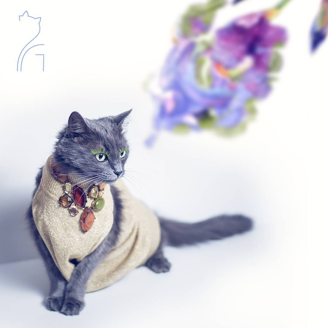 the_most_fashionable_cat_pitzush_puss_in_glam_07