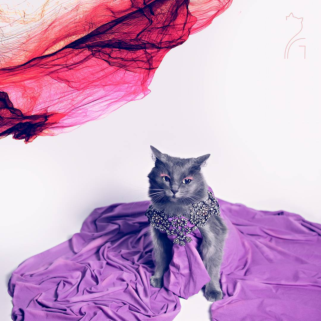 the_most_fashionable_cat_pitzush_puss_in_glam_08