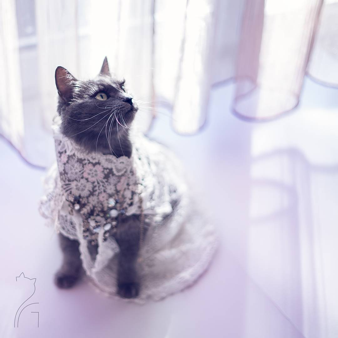 the_most_fashionable_cat_pitzush_puss_in_glam_11