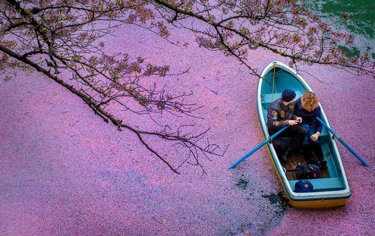 these-photos-of-japanese-cherry-blossoms-are-out-of-this-world-00