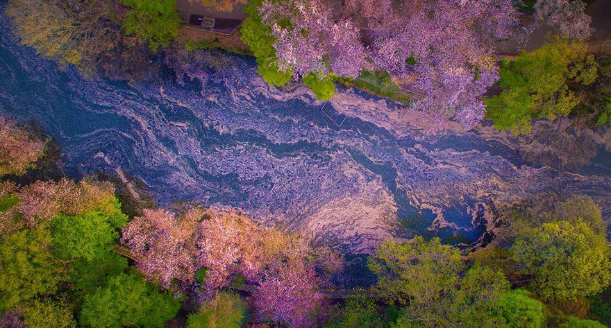 these-photos-of-japanese-cherry-blossoms-are-out-of-this-world-05