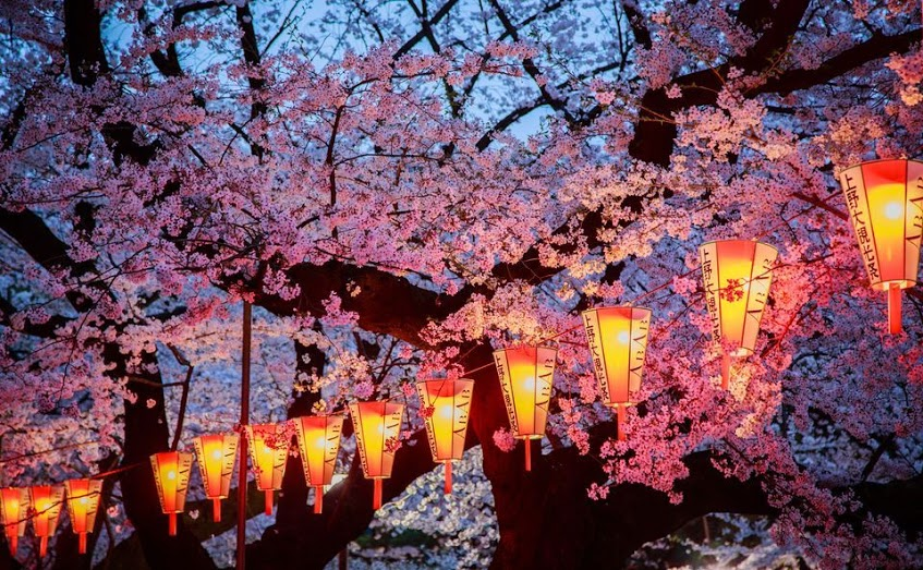 these-photos-of-japanese-cherry-blossoms-are-out-of-this-world-10