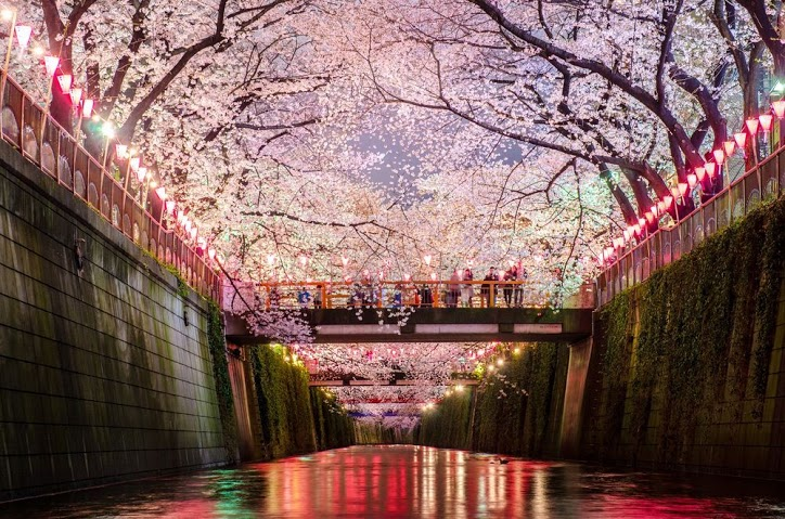 these-photos-of-japanese-cherry-blossoms-are-out-of-this-world-11