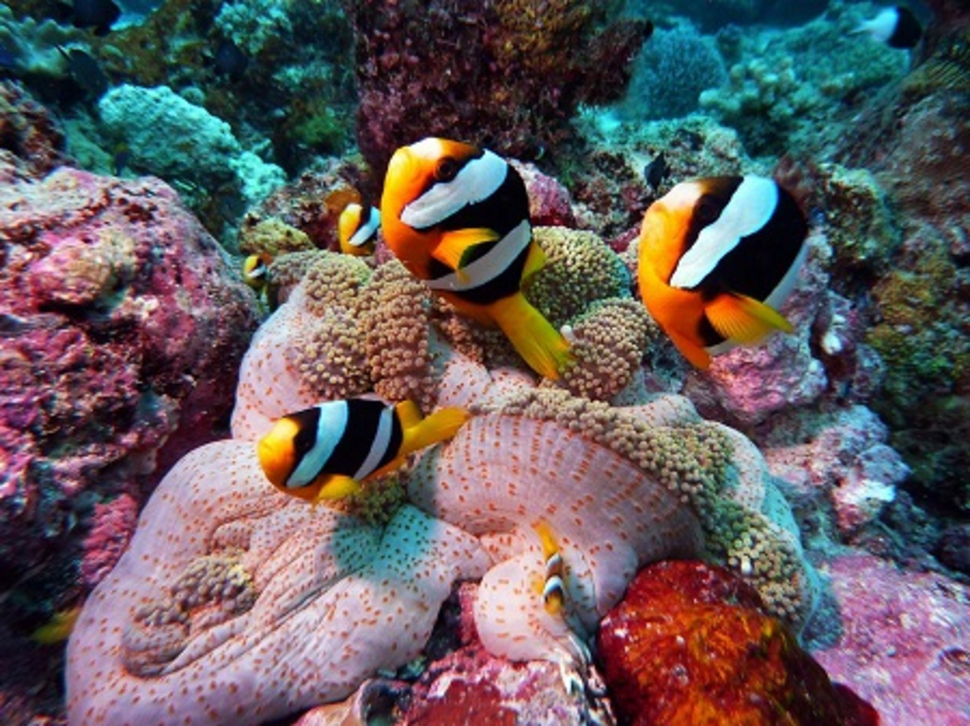 the-most-stunning-coral-reefs-you-definitely-need-to-visit-01