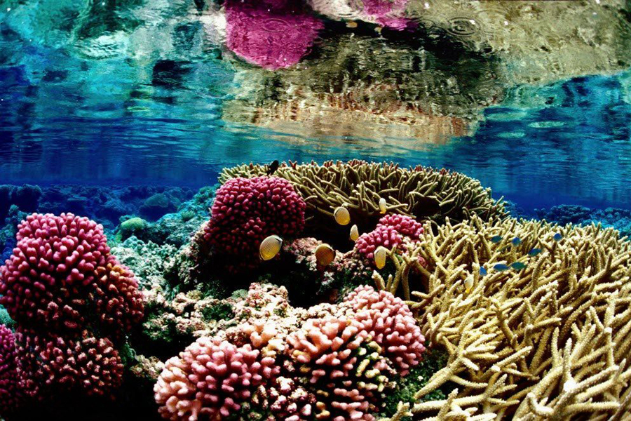 the-most-stunning-coral-reefs-you-definitely-need-to-visit-02