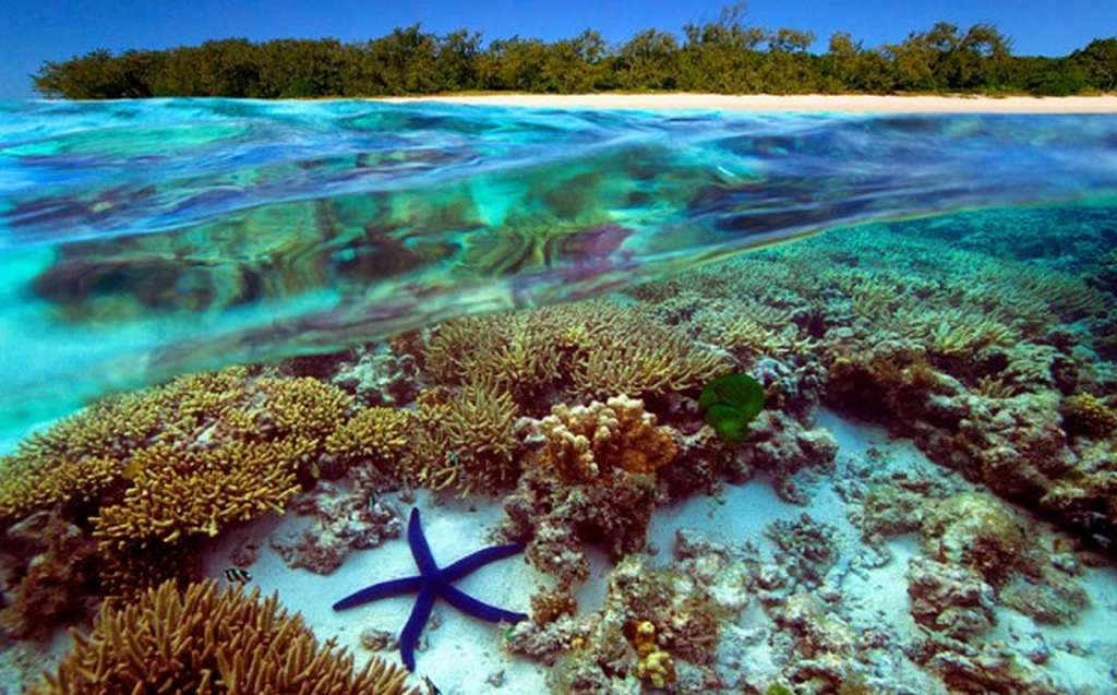 the-most-stunning-coral-reefs-you-definitely-need-to-visit-10