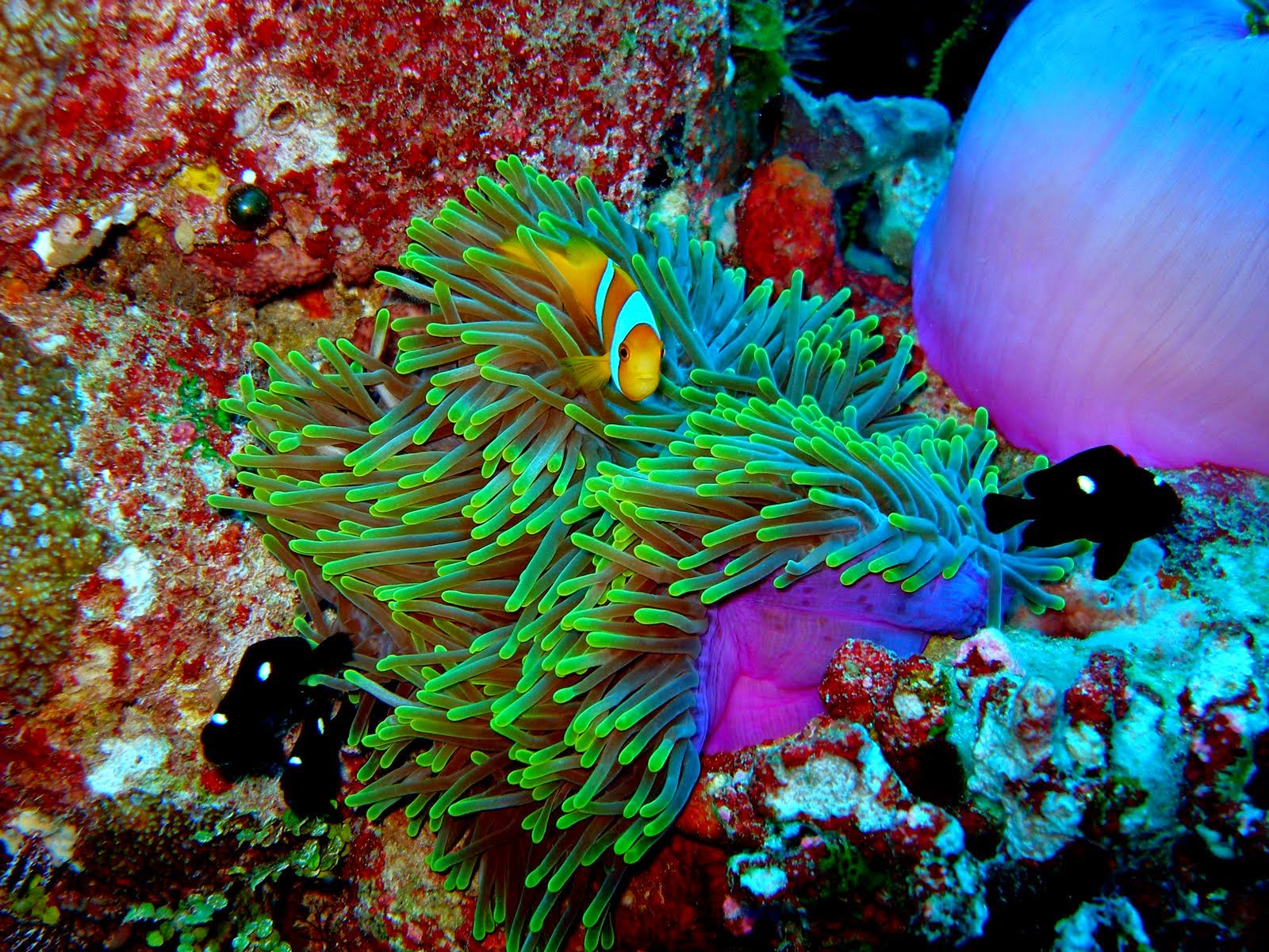 the-most-stunning-coral-reefs-you-definitely-need-to-visit-13