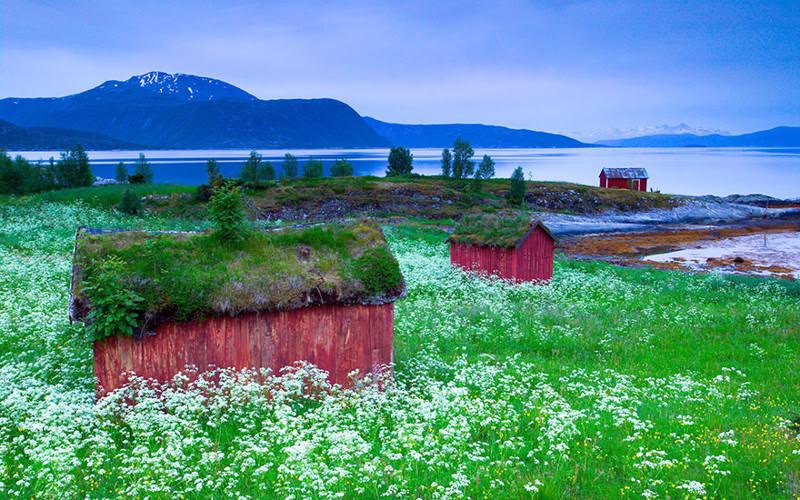 amazing-fairytale-grass-roofs-of-scandinavia-06