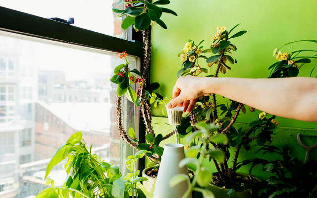 a-girl-with-a-green-thumb-500-plants-in-one-apartment-03