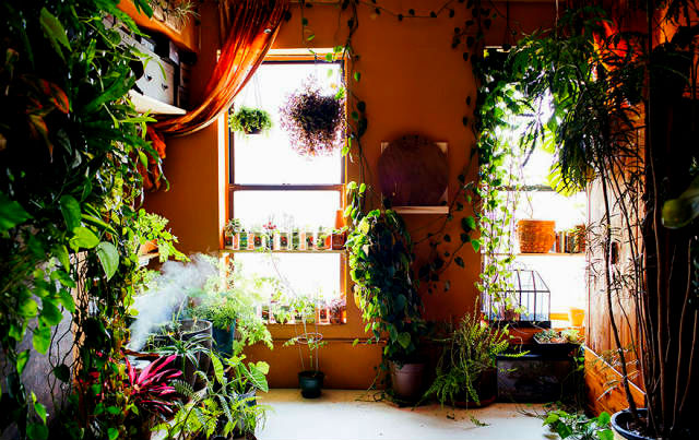 a-girl-with-a-green-thumb-500-plants-in-one-apartment-05