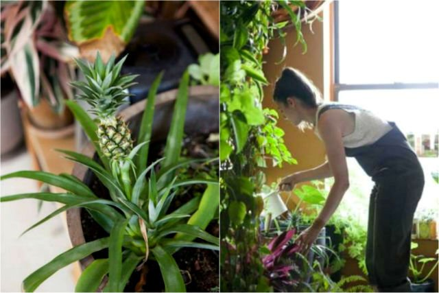 a-girl-with-a-green-thumb-500-plants-in-one-apartment-12