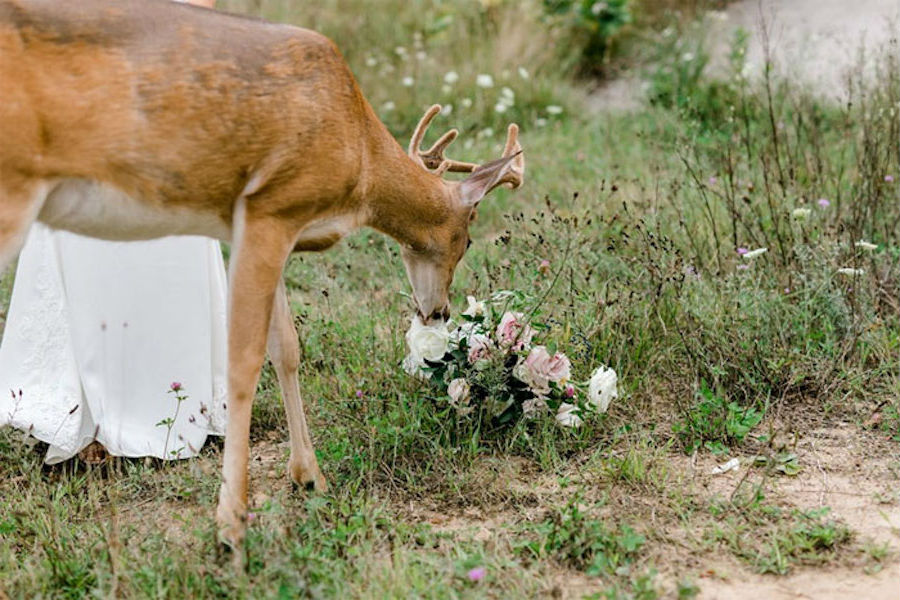 A Wedding Photoshoot To Remember Gets Interrupted By A Deer #7 | Her Beauty