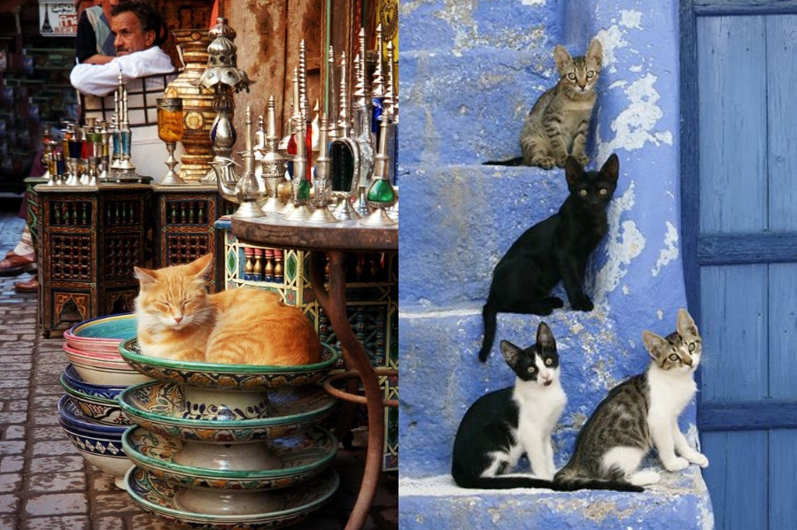 Cats | 8 Reasons Why You Should Visit Morocco | Her Beauty
