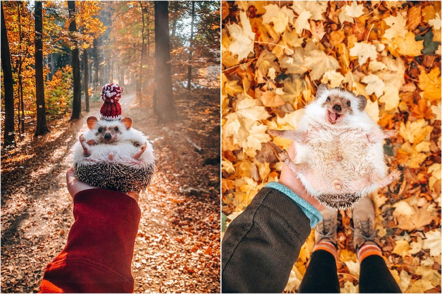 Cosy outfits | Mr Pokee The Hedgehog Will Make Your Day | Her Beauty