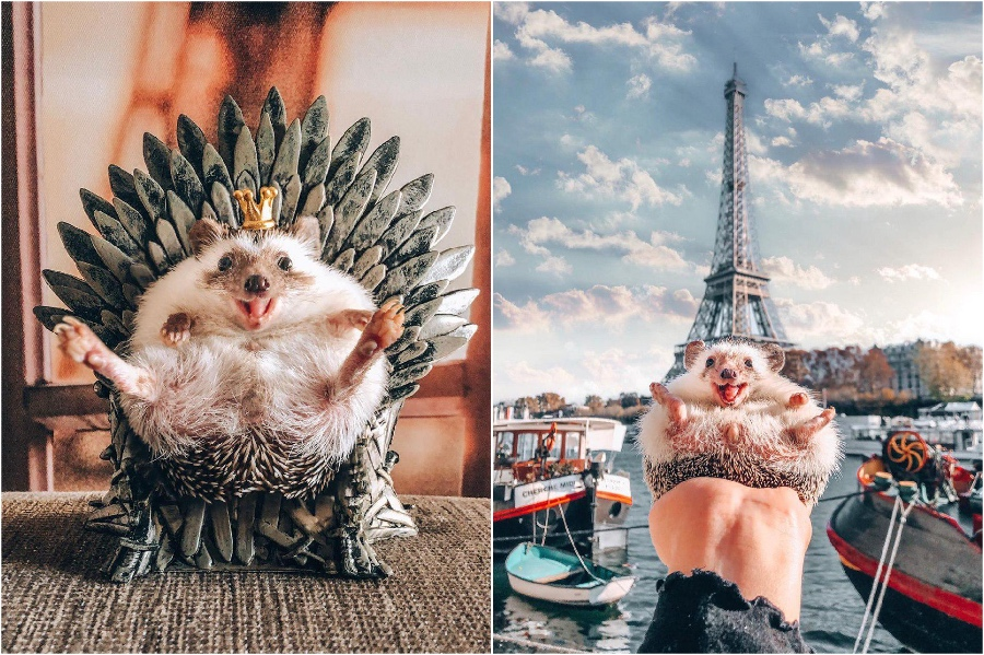 Game of Thrones | Mr Pokee The Hedgehog Will Make Your Day | Her Beauty
