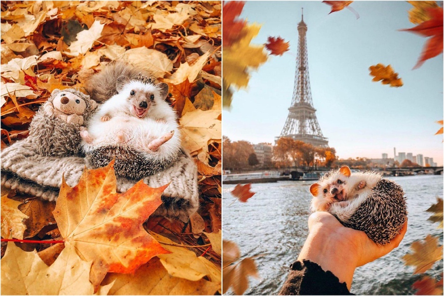 Paris | Mr Pokee The Hedgehog Will Make Your Day | Her Beauty