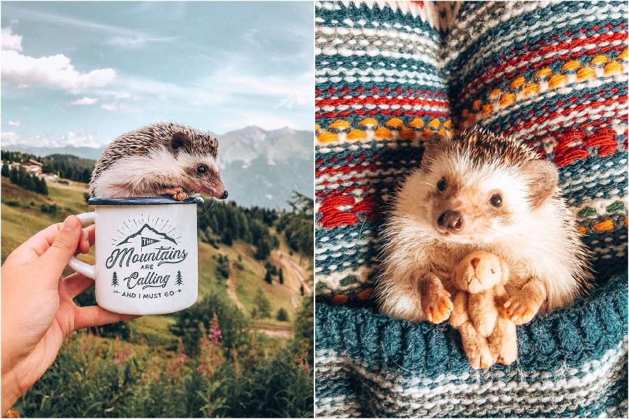 Cuddling up in warm blankets | Mr Pokee The Hedgehog Will Make Your Day | Her Beauty