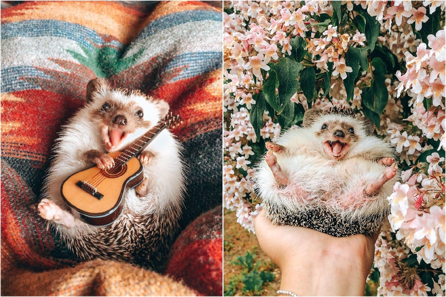 Little guitar | Mr Pokee The Hedgehog Will Make Your Day | Her Beauty