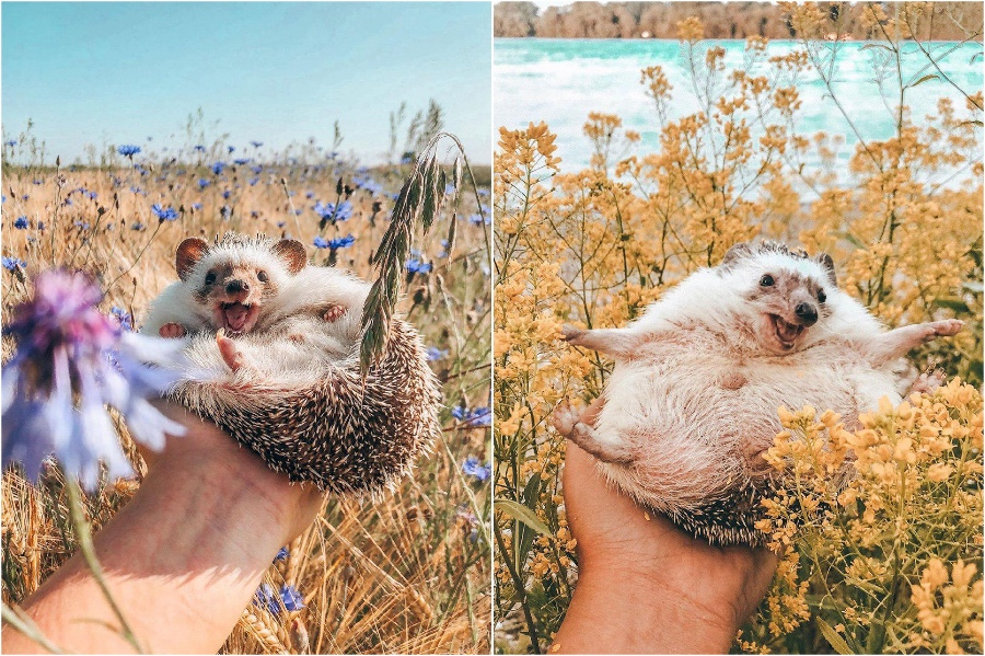 Photo shoot in the flowers | Mr Pokee The Hedgehog Will Make Your Day | Her Beauty