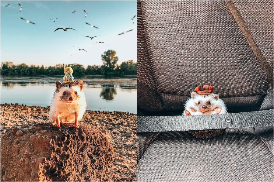 Mr Pokee travels in style | Mr Pokee The Hedgehog Will Make Your Day | Her Beauty