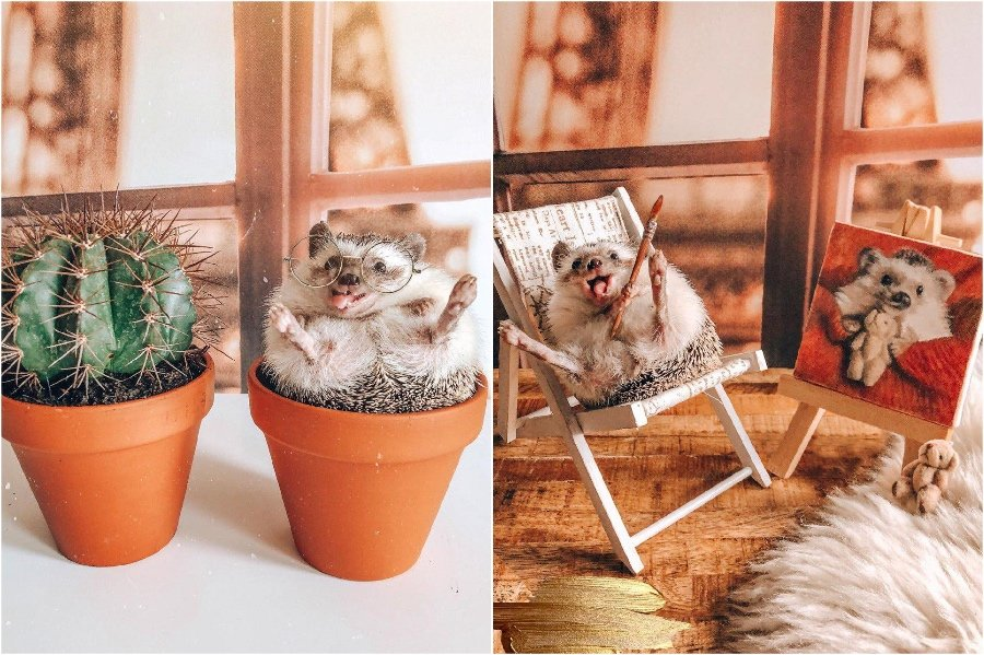 Self-portraits | Mr Pokee The Hedgehog Will Make Your Day | Her Beauty