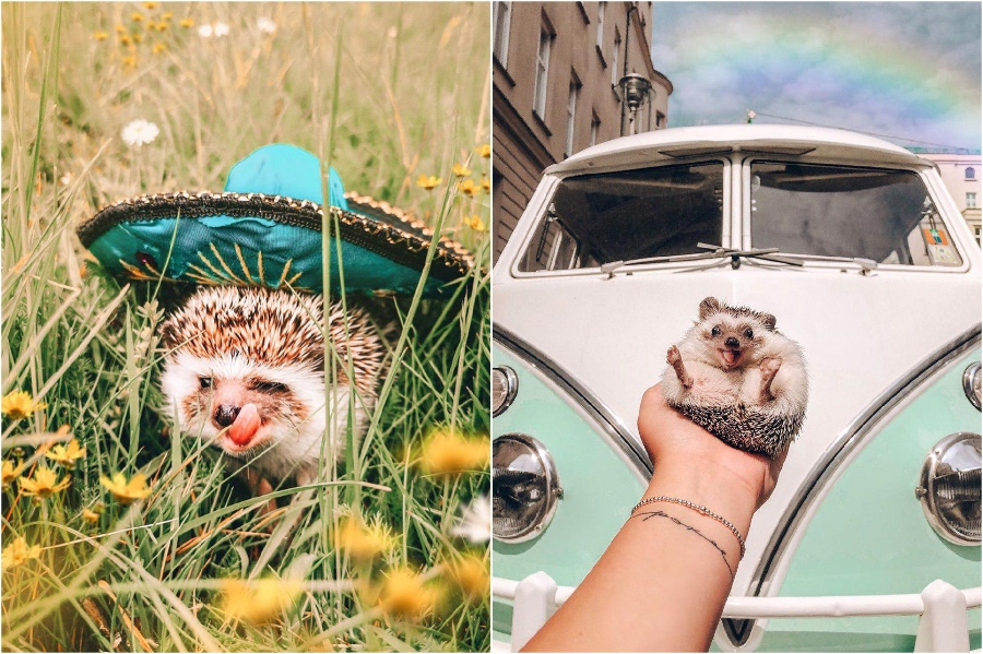 Trip to Mexico | Mr Pokee The Hedgehog Will Make Your Day | Her Beauty