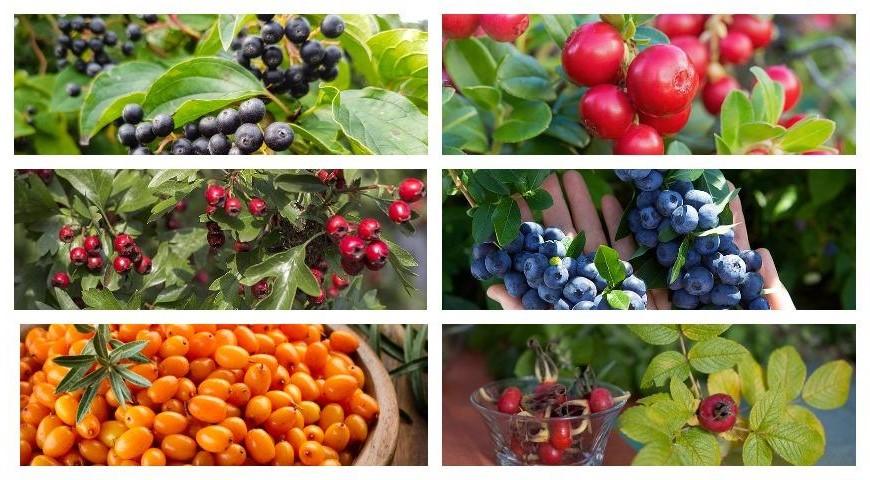 Осенние ягоды | Что есть осенью: 7 полезных сезонных продуктов | Her Beauty