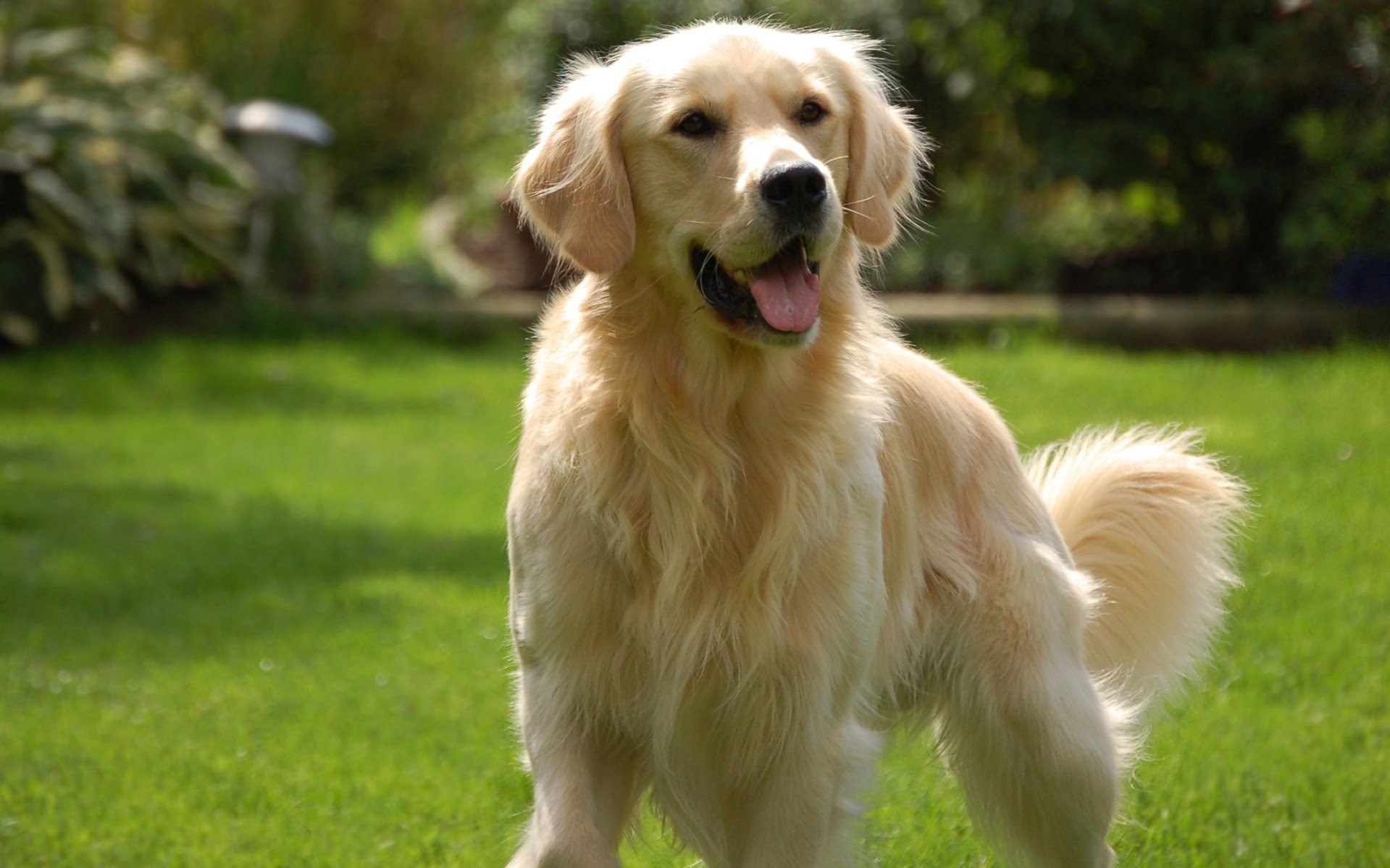 Golden Retriever | 9 of The Best Family Friendly Dog Breeds | Her Beauty
