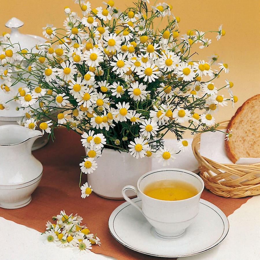 Lenisce la pelle irritata | 8 benefici del tè alla camomilla | Her Beauty