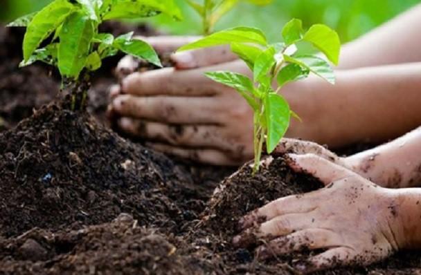 Piantare un albero  | 8 piccole azioni per salvare il mondo | HerBeauty