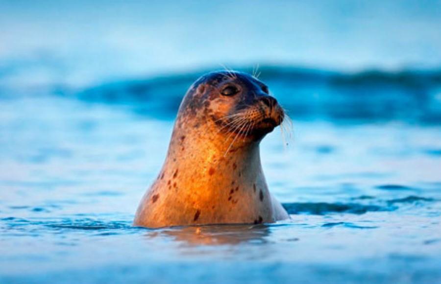 Белое море | Топ-10 самых красивых морей в мире | Her Beauty