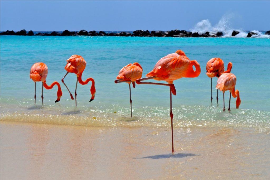 Карибское море | Топ-10 самых красивых морей в мире | Her Beauty