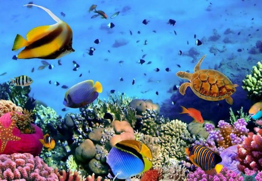 Красное море | Топ-10 самых красивых морей в мире | Her Beauty