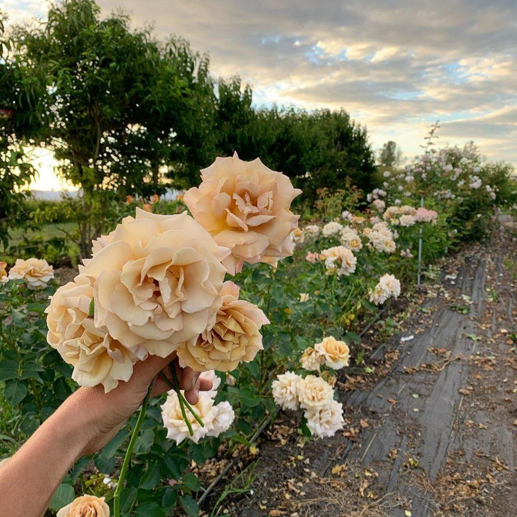 This Unreal Flower Farm Makes The Most Gorgeous Floral Arrangements #12 | Her Beauty