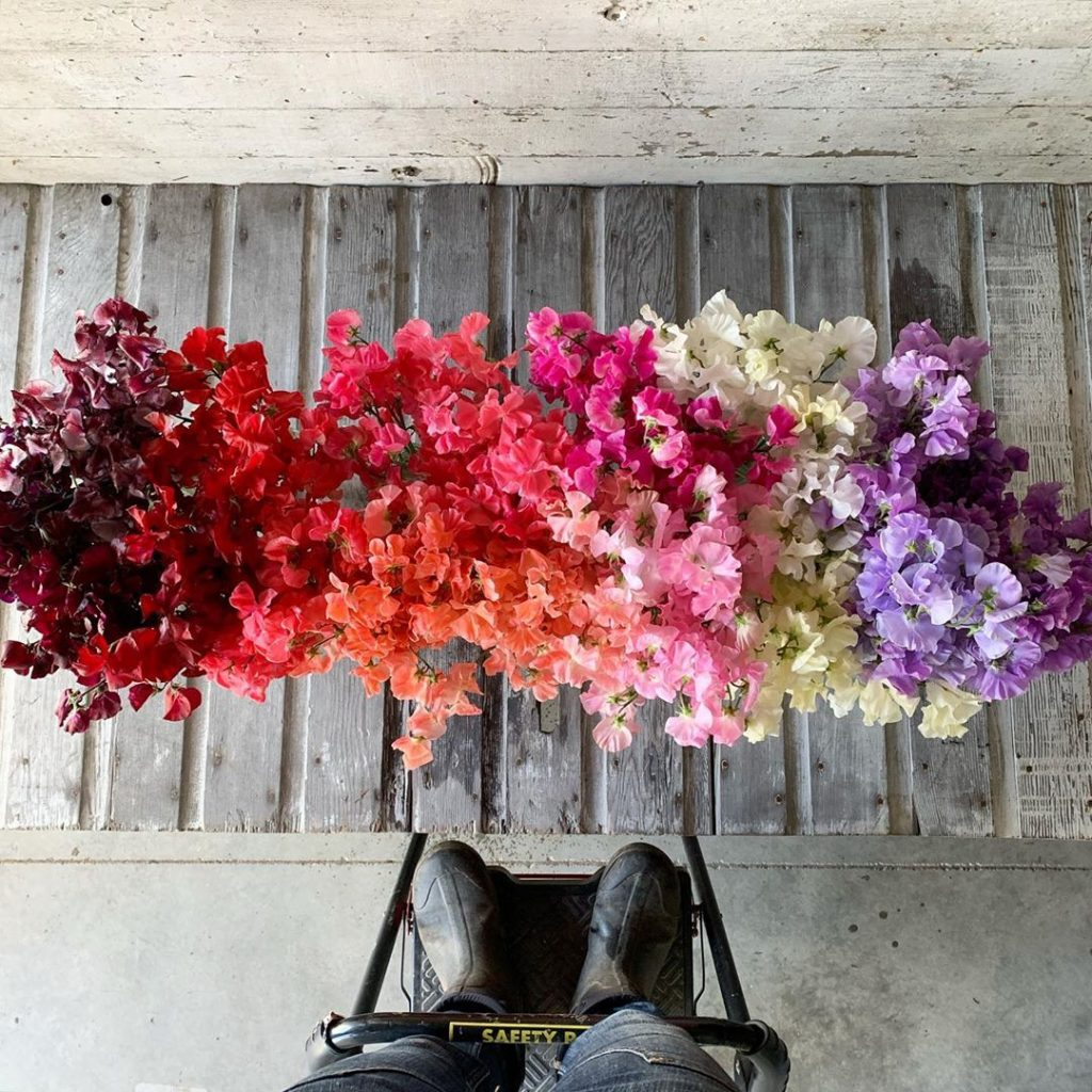 This Unreal Flower Farm Makes The Most Gorgeous Floral Arrangements #13 | Her Beauty